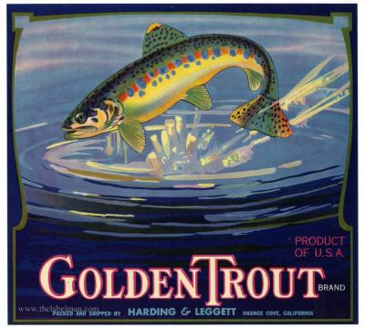 Fruit Label Golden Trout 1930's